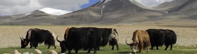 Tibet Nature & Culture Tour