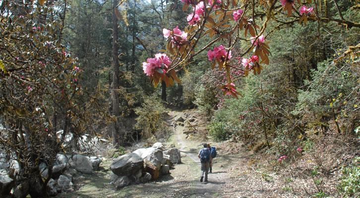 Rara Khaptad-rhododendron
