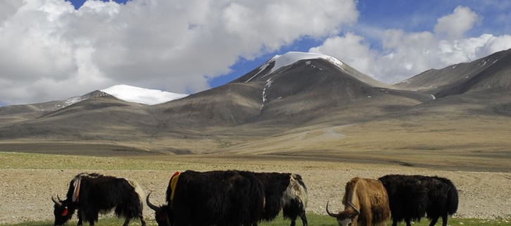 Tibet Nature and Culture Tour