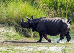 wildlife safari chitwan