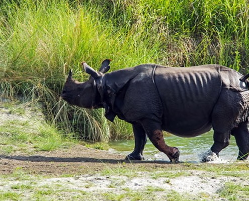 wildlife safari chitwan