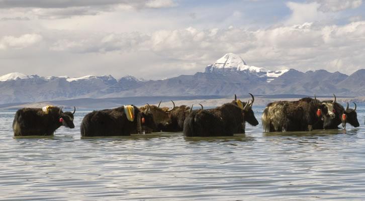 Mt Kailash-Mansarovar special