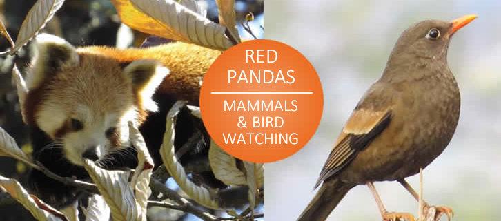 pandas and birds